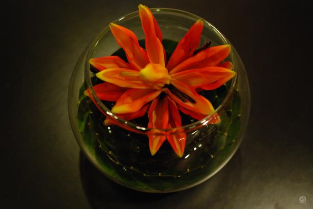 あかいろの花