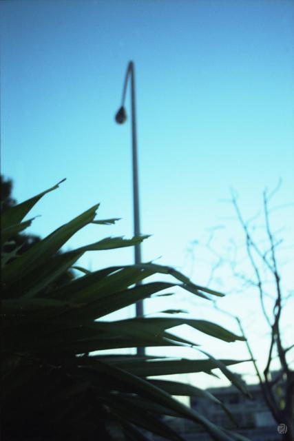 朝方の街灯
